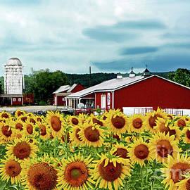 Regina Geoghan - Sunflowers, Farm and Sky