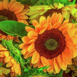 Sunflowers In The Garden - Garry Gay