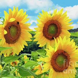 Regina Geoghan - Sunflowers Morning