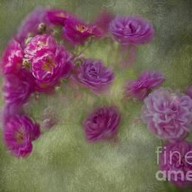 Eva Lechner - Sunkissed Roses