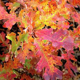 David Millenheft - Sunlight Leaves