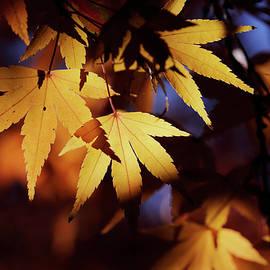 Nicholas Blackwell - Sunlight Through Leaves