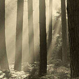 Sunlight through trees by Justin Foulkes