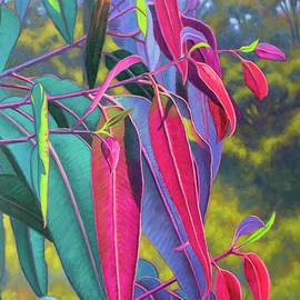 Sunlit Gumleaves 17 by Fiona Craig