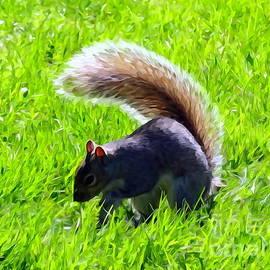 Ed Weidman - Sunlit Squirrel