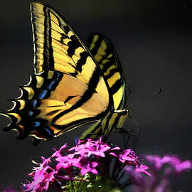 Sunlit Swallowtail by Donna Kennedy