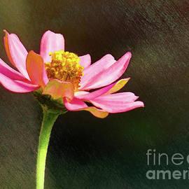 Sue Melvin - Sunlit Uplifting Beauty