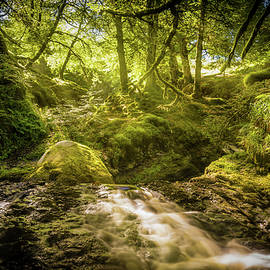 Sunlit Woodland Glade by Gareth Burge Photography