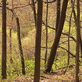 Sunlit Woods by Ann Horn