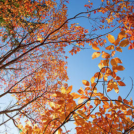 Kunal Mehra - Sunny autumn days in Hoyt Arboretum
