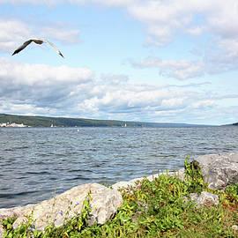 Trina Ansel - Sunny Day at Seneca Lake