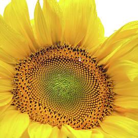 Jenny Rainbow - Sunny Flower 1