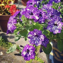 Rowena Tutty - Sunny Garden Pots