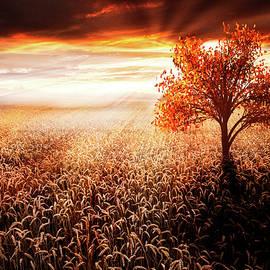 Sunrays in Copper  by Debra and Dave Vanderlaan