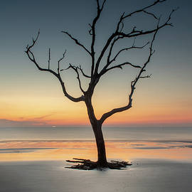 Sunrise And A Driftwood Tree by Greg and Chrystal Mimbs