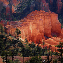 Donna Kennedy - Sunrise at Bryce Canyon