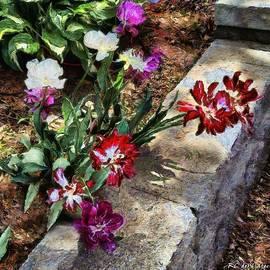 RC deWinter - Sunrise Garden