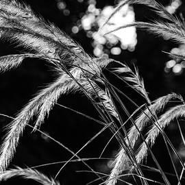 Sunrise Grasses by Glenn DiPaola