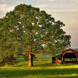 Reid Callaway - Sunrise Oak 2 The Red Barn Art