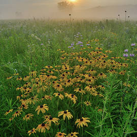 Ray Mathis - Sunrise on Wildflowers in West Glacial Park