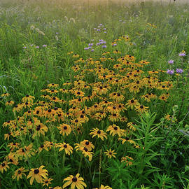 Ray Mathis - Sunrise on Wildflowers of Glacial Park