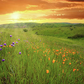 Lynn Bauer - Sunrise Over Happy Camp Wildflowers