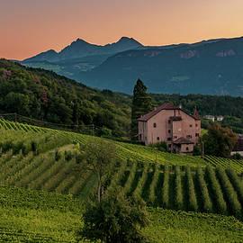 Amy Dooley - Sunrise over Vineyards in Bolzano, Italy