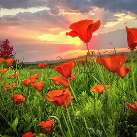 Debra and Dave Vanderlaan - Sunrise Poppies