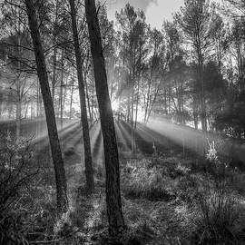 Sunrise through the foggy forest by Guido Montanes Castillo