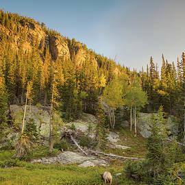Kunal Mehra - Sunrise with elk