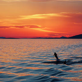 Sunset and Dolphins by Sally Weigand