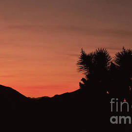 Sunset at Joshua Tree National Park by Debby Pueschel