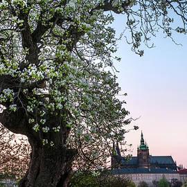 Jenny Rainbow - Sunset At Petrin Hill in Spring. Prague