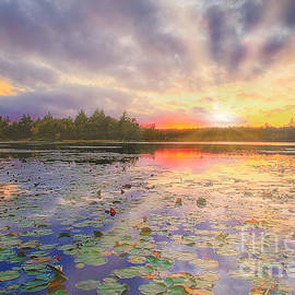 Sunset at shaws Nature Reserve by Peggy Franz