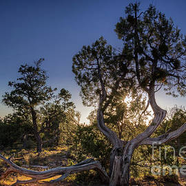 Sunset At The Grand Canyon by Franz Zarda