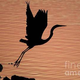 Kathy Stewart - Sunset Egret