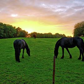 Sunset Horses by Ingrid Dendievel
