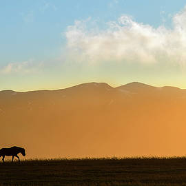 Sunset Icelandic Horse Silhouette by Dave Dilli