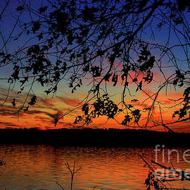 Reid Callaway - Sunset Oak Silhouettes Sky Reflective Art