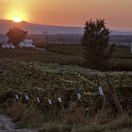 Sunset Over Colorado Vineyard by Teri Virbickis