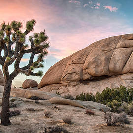 Sunset over Joshua Tree - Dave Dilli