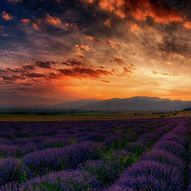 Plamen Petkov - Sunset over lavender field 2