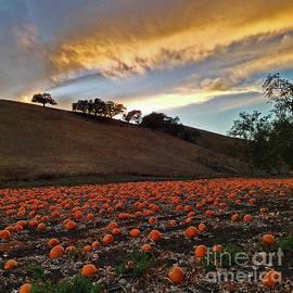 Craig Corwin - Sunset Over The Pumpkin Patch