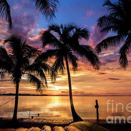 Sunset Palms - Jon Neidert