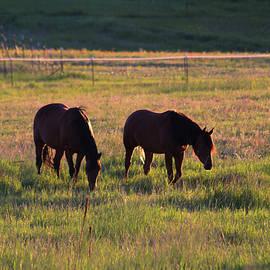 Sunset Quarter Horses by Alana Thrower