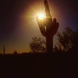 Sunset Saguaro Cactus