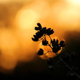 Sunset Silhouette Of Foliage by Sarah Broadmeadow-Thomas