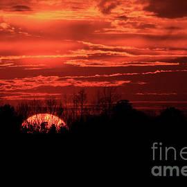 Reid Callaway - Sunset Silhouettes Forest Fire Art
