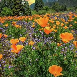 Sunset Skies and Wildflowers at the Oak Glen Preserve by Lynn Bauer