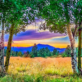 Bob and Nadine Johnston - Sunset through the Birch Trees